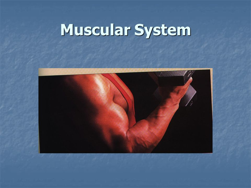 Three types of Muscles Found in the Body