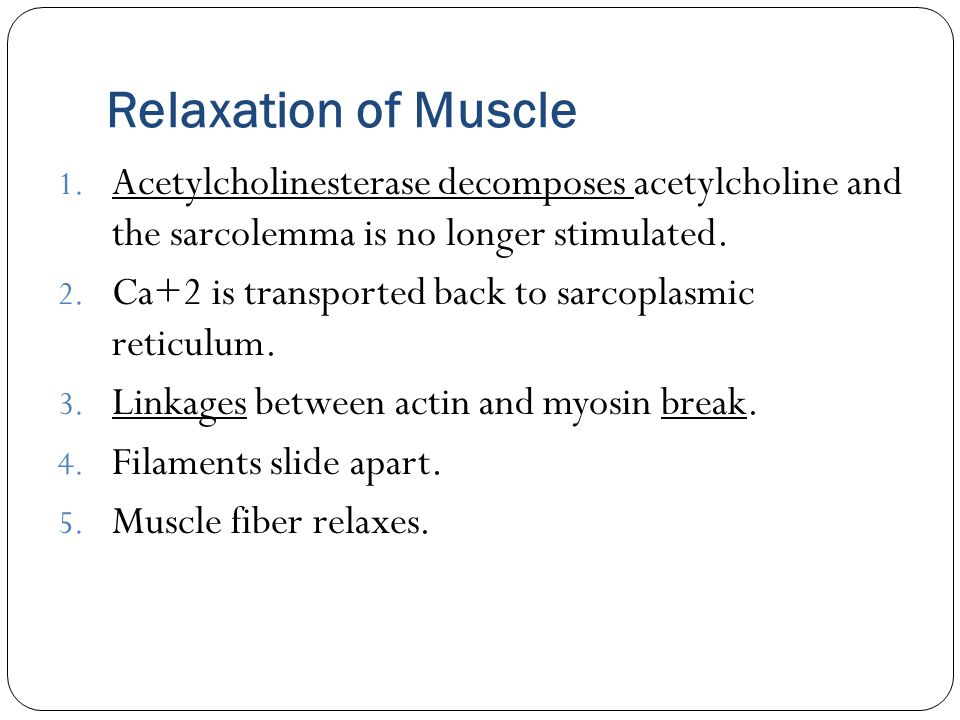 Relaxation of Muscle 1. Acetylcholinesterase decomposes acetylcholine and the sarcolemma is no longer stimulated. 2. Ca+2 is transported back to sarco