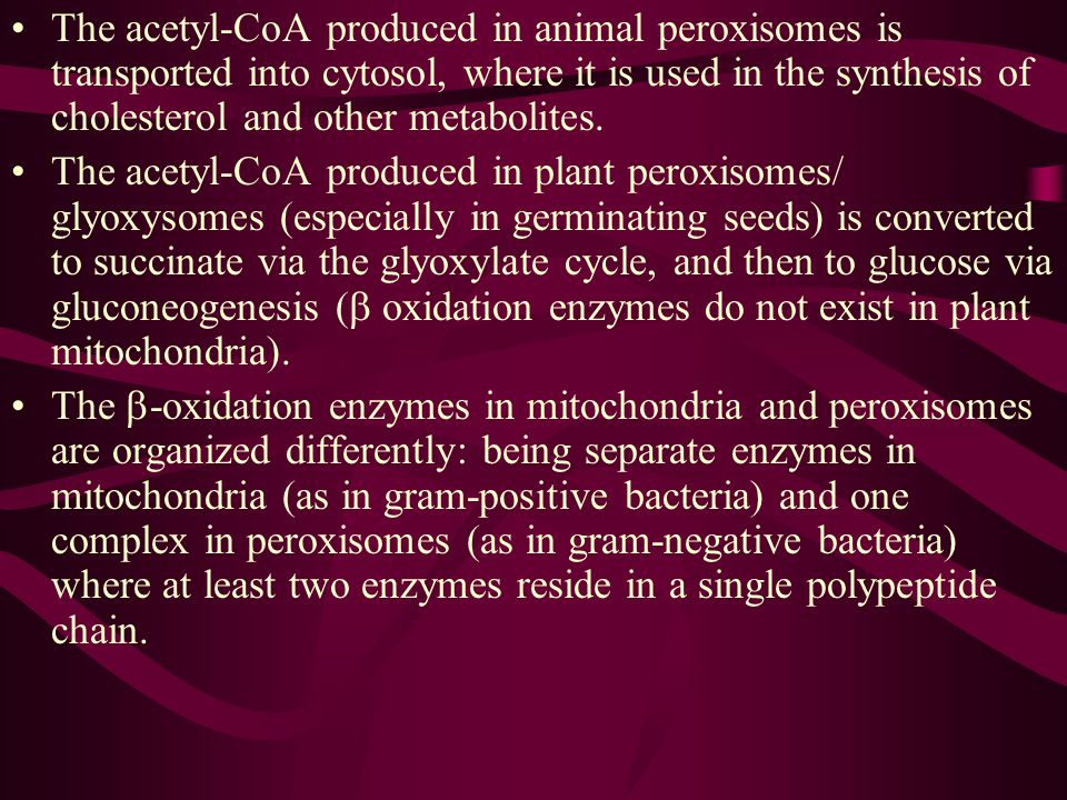 12. Fatty acid oxidation also occurs in peroxisomes (glyoxysomes) Peroxisome is now recognized as the principle organelle in which fatty acids are oxi