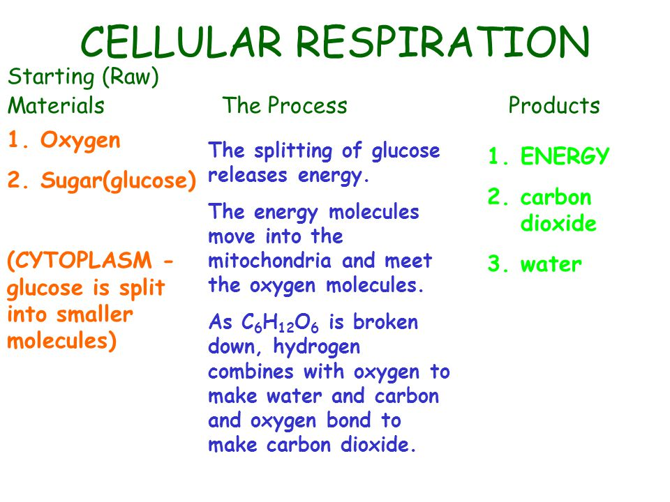 Now Create a Diagram That Illustrates Cellular Respiration Turn to page 92 of the textbook and draw a diagram of a mitochondria.