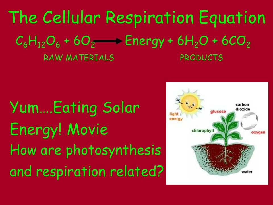 Can You Compare Photosynthesis to Cellular Respiration.