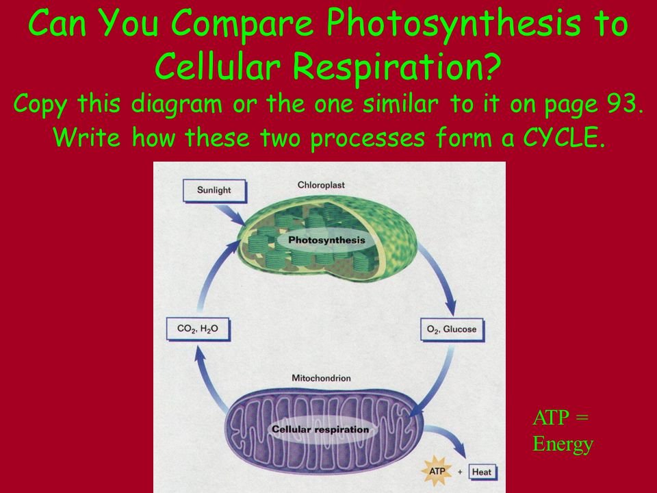 PhotosynthesisRespiration Occurs in the presence of light (and chlorophyll in plant cells) Occurs at all times in cells Requires energy (light) to make sugar (glucose) Releases energy from sugar Complex substances (sugar) are formed from simpler ones.