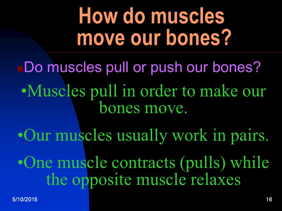 5/10/201515 Are muscles dense. Yes - Muscles make up about half of your body weight.