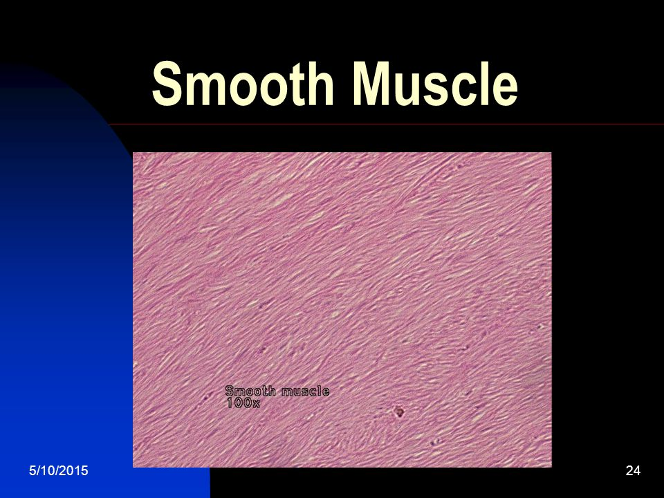 5/10/201523 Smooth Muscles Are involuntary muscles that make up the blood vessels, stomach, intestines, and other groups We can not control our smooth muscles What are some example of when our smooth muscles are used.