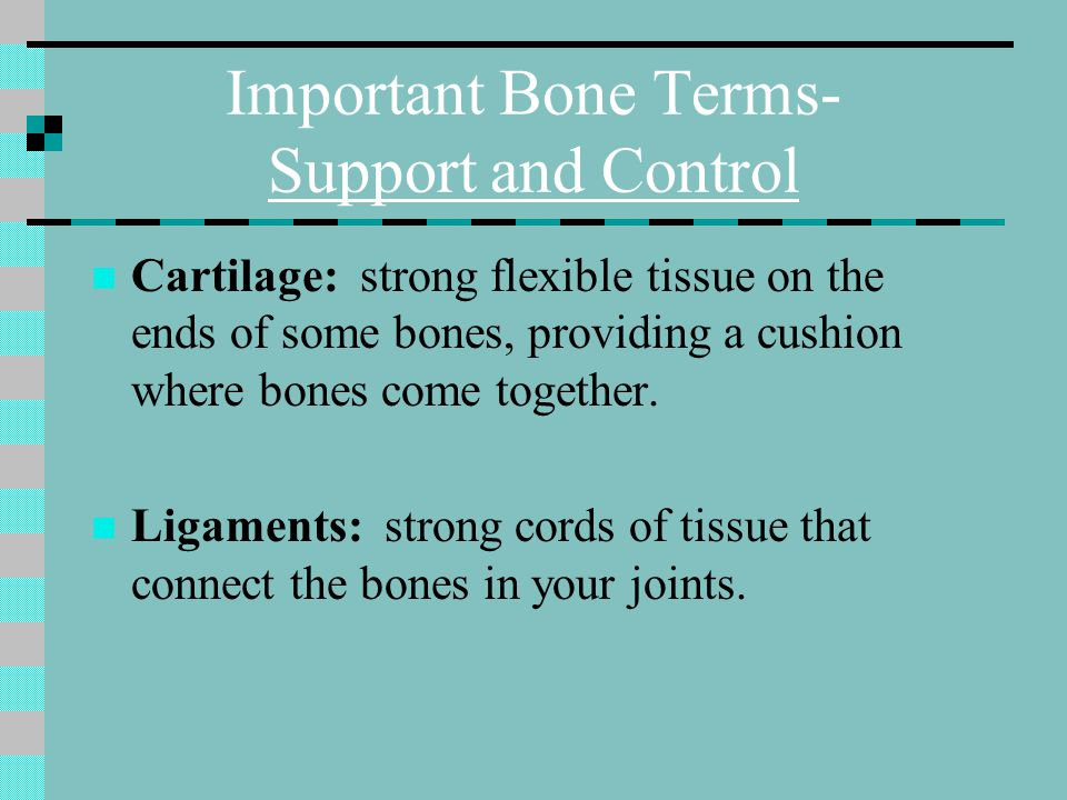 Important Bone Terms- Support and Control Support and Control Cartilage: strong flexible tissue on the ends of some bones, providing a cushion where b