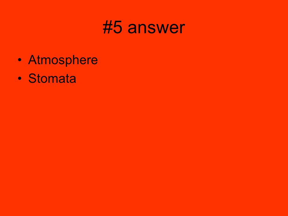 #5 answer Atmosphere Stomata