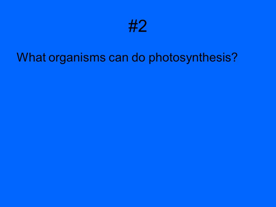 #2 What organisms can do photosynthesis?