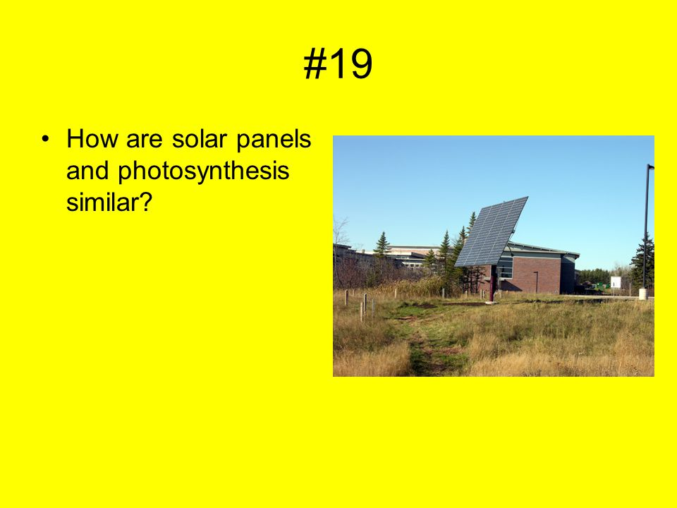 #19 How are solar panels and photosynthesis similar?