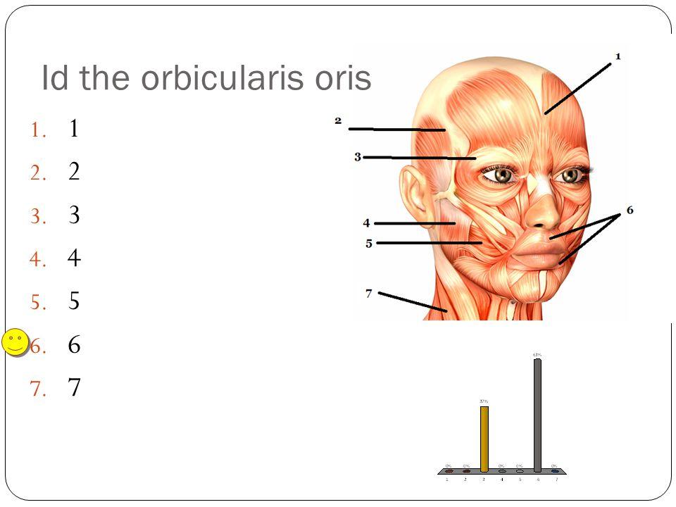 1. 1 2. 2 3. 3 4. 4 5. 5 6. 6 7. 7 Id the orbicularis oris