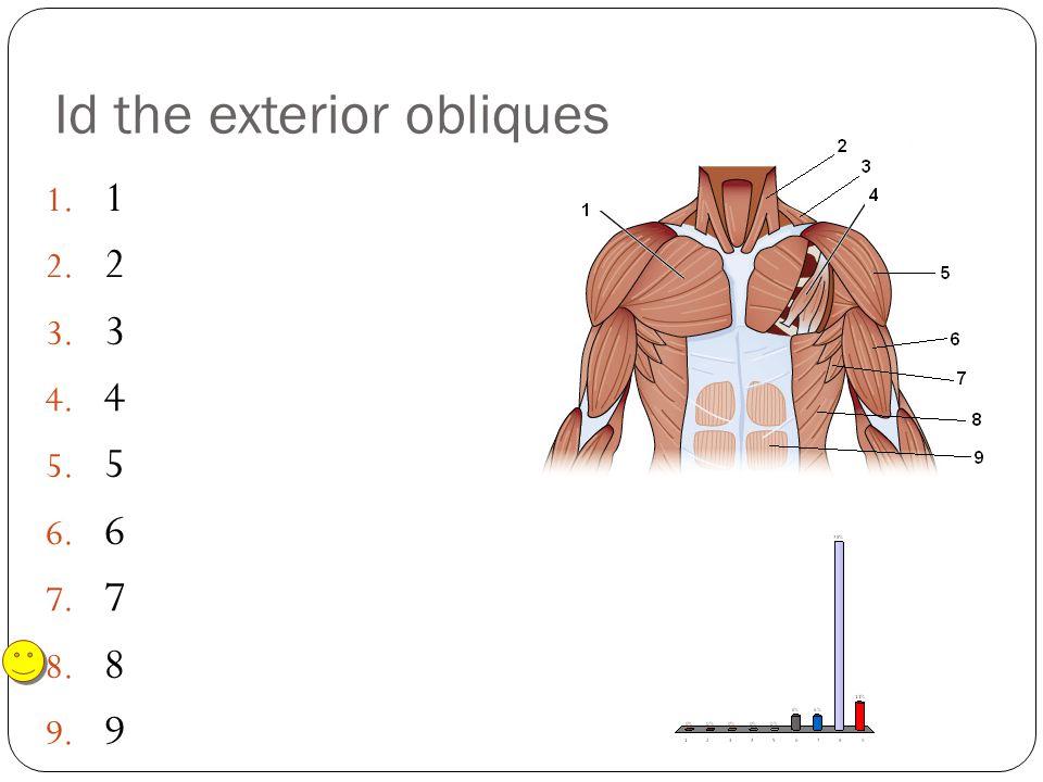 Id the exterior obliques 1. 1 2. 2 3. 3 4. 4 5. 5 6. 6 7. 7 8. 8 9. 9