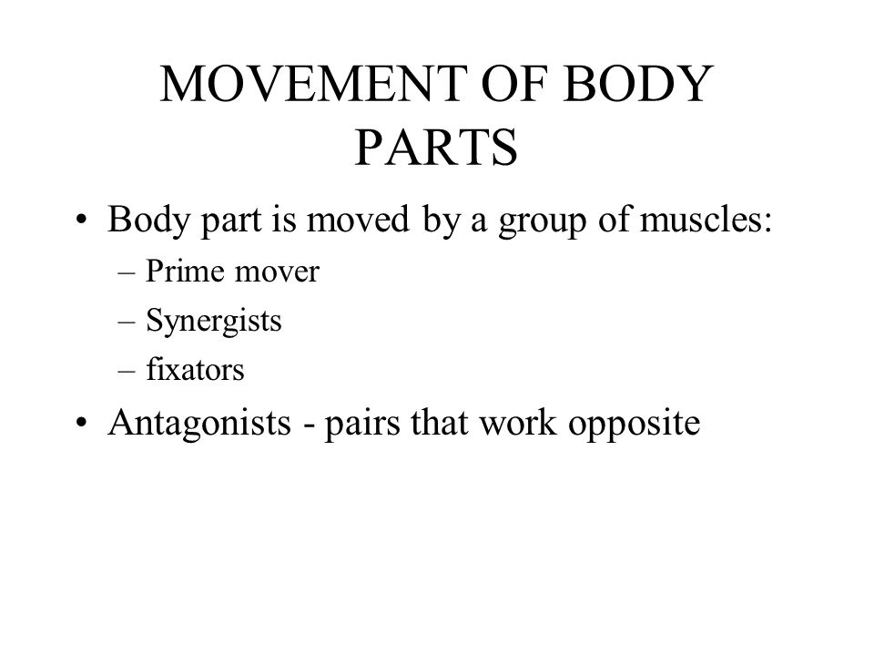MOVEMENT OF BODY PARTS Body part is moved by a group of muscles: –Prime mover –Synergists –fixators Antagonists - pairs that work opposite