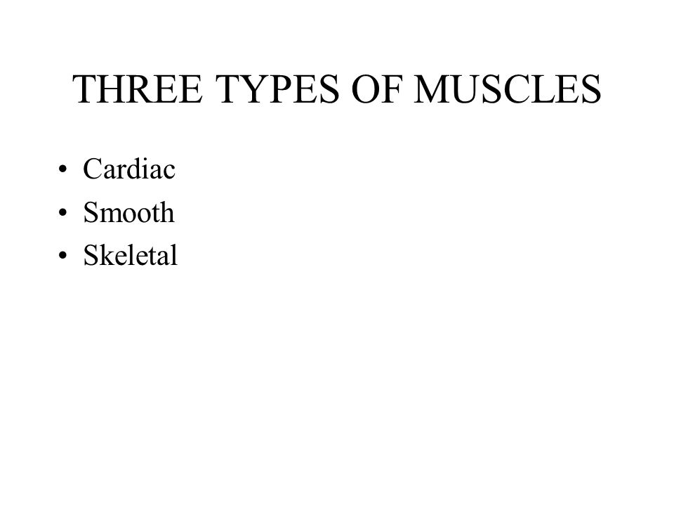THREE TYPES OF MUSCLES Cardiac Smooth Skeletal