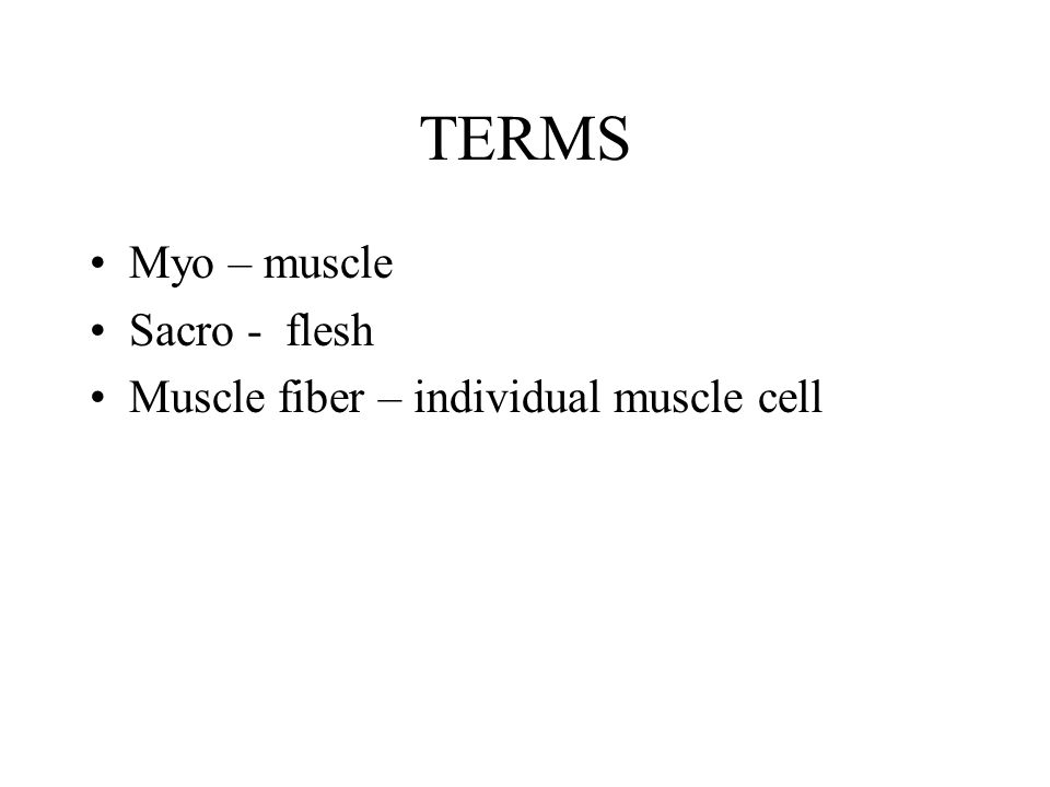 TERMS Myo – muscle Sacro - flesh Muscle fiber – individual muscle cell