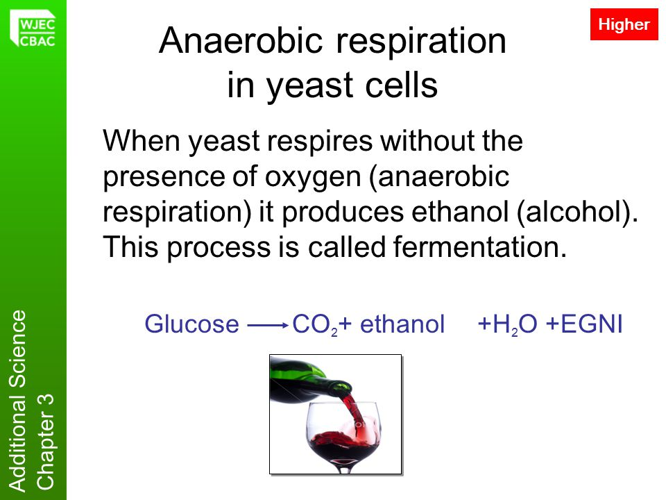 Additional Science Chapter 3 Anaerobic respiration in yeast cells When yeast respires without the presence of oxygen (anaerobic respiration) it produc