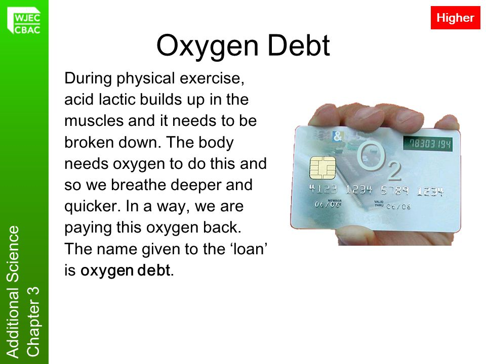 Additional Science Chapter 3 Oxygen Debt During physical exercise, acid lactic builds up in the muscles and it needs to be broken down. The body needs