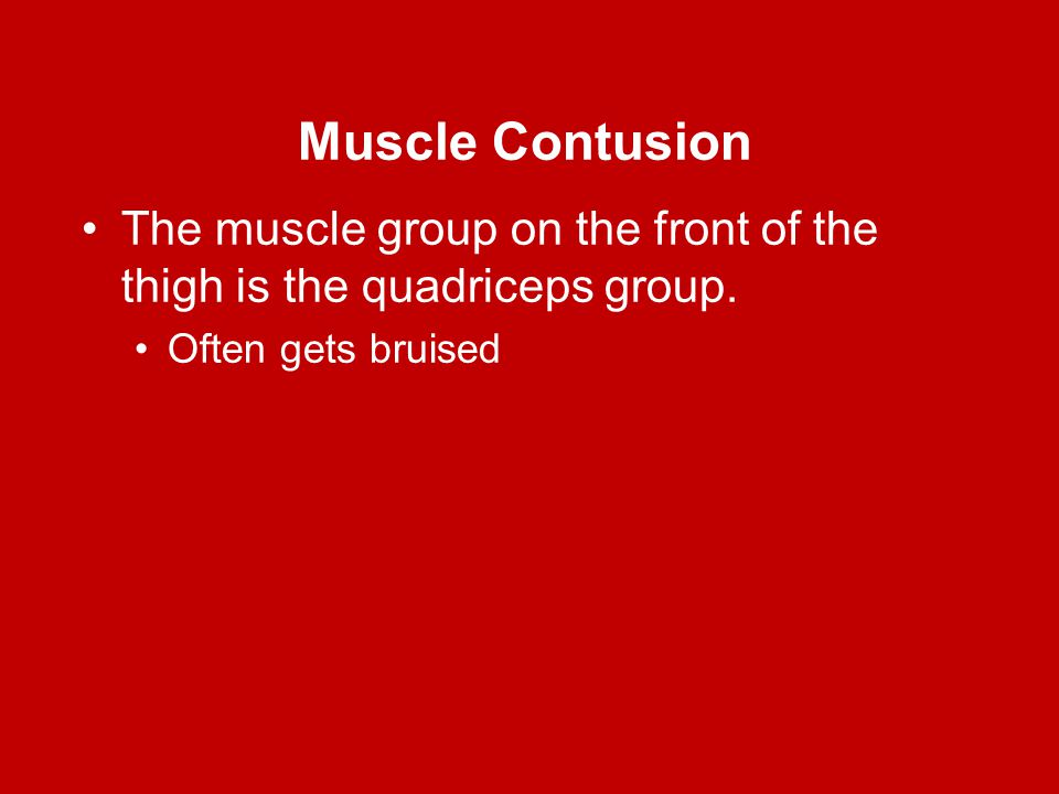 Muscle Contusion The muscle group on the front of the thigh is the quadriceps group. Often gets bruised