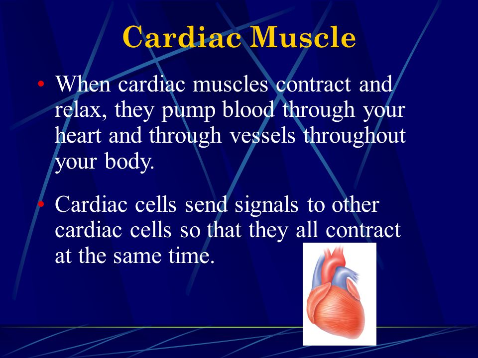 Cardiac Muscle When cardiac muscles contract and relax, they pump blood through your heart and through vessels throughout your body. Cardiac cells sen