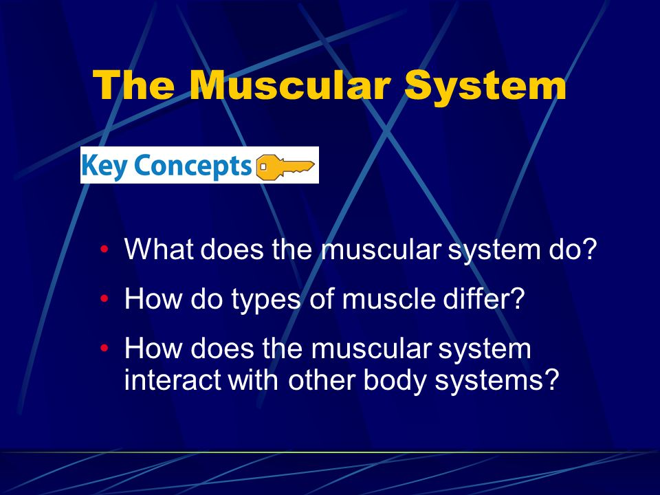 The Muscular System What does the muscular system do? How do types of muscle differ? How does the muscular system interact with other body systems?