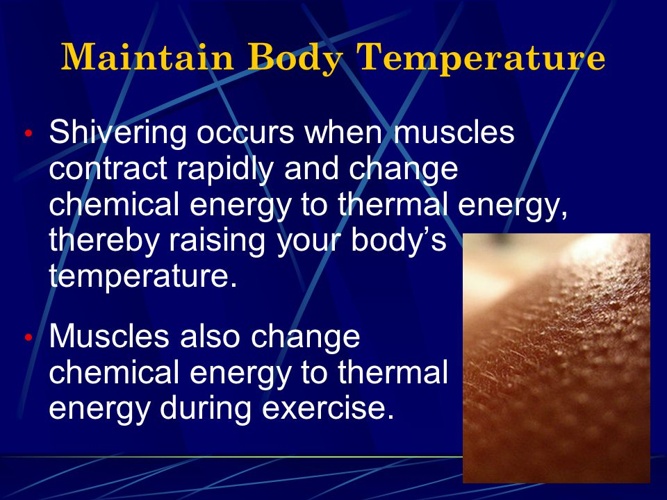 Helps Digestion & Respiration There are many muscles in your body that are not attached to bones.