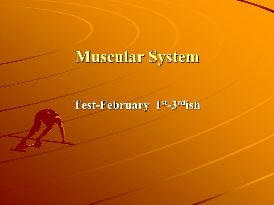 Muscular System Test-February 1 st -3 rd ish