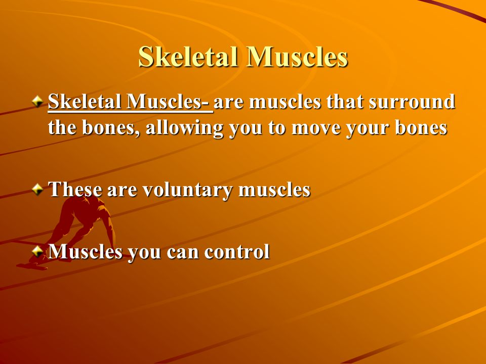 Skeletal Muscles Skeletal Muscles- are muscles that surround the bones, allowing you to move your bones These are voluntary muscles Muscles you can control