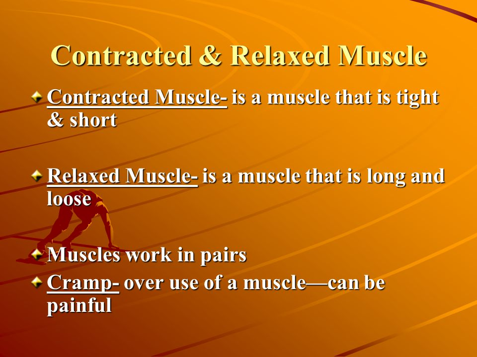 Contracted & Relaxed Muscle Contracted Muscle- is a muscle that is tight & short Relaxed Muscle- is a muscle that is long and loose Muscles work in pairs Cramp- over use of a muscle—can be painful