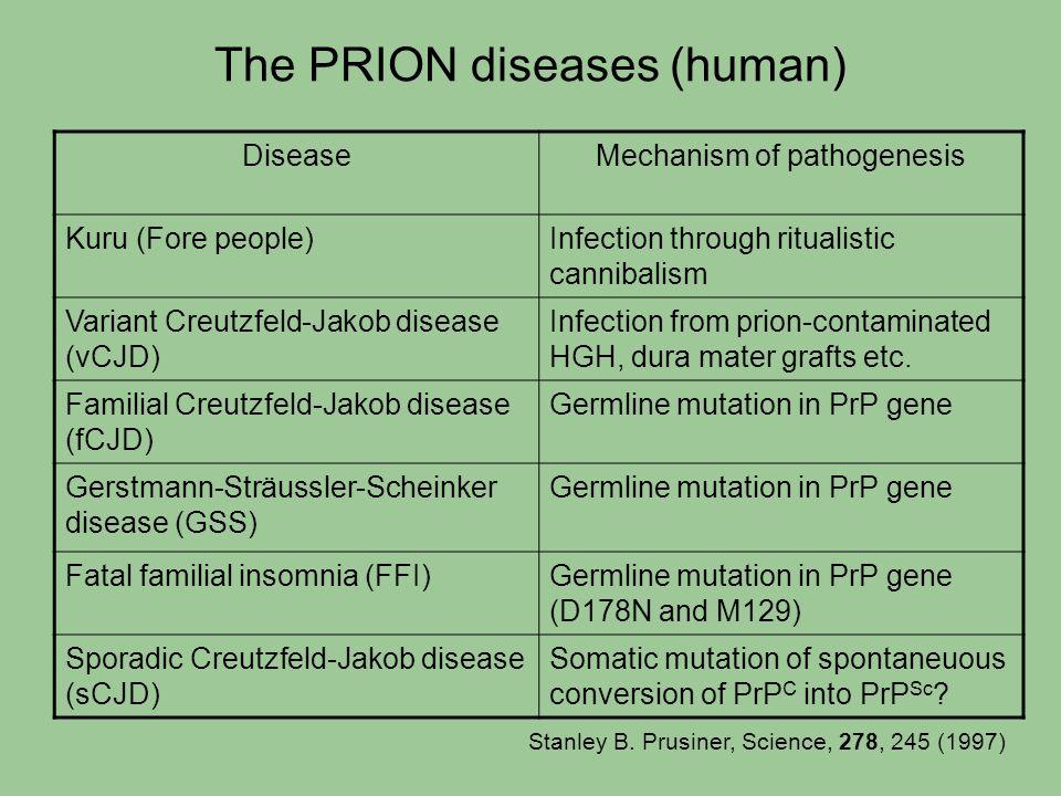 The PRION diseases (human) DiseaseMechanism of pathogenesis Kuru (Fore people)Infection through ritualistic cannibalism Variant Creutzfeld-Jakob disea
