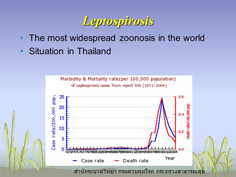 Leptospirosis The most widespread zoonosis in the world Situation in Thailand สำนักระบาดวิทยา กรมควบคุมโรค กระทรวงสาธารณสุข