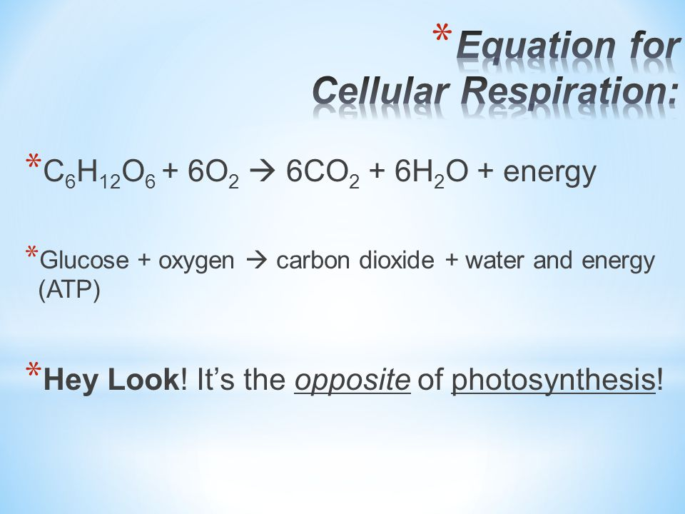 * Both animals (heterotrophs) and plants (autotrophs) do cellular respiration.