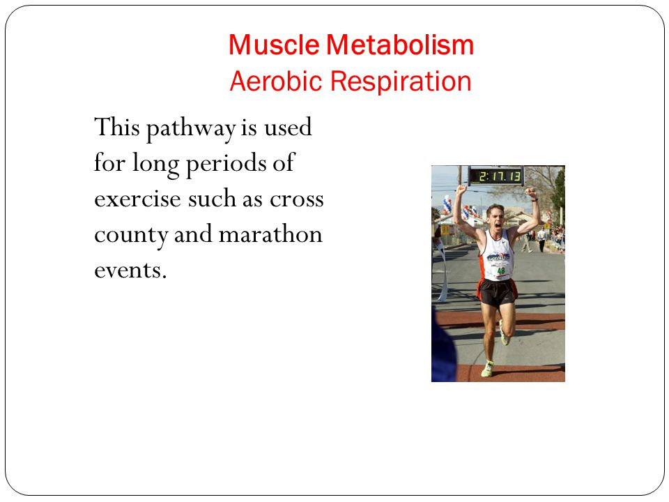 Muscle Metabolism Aerobic Respiration This pathway is used for long periods of exercise such as cross county and marathon events.