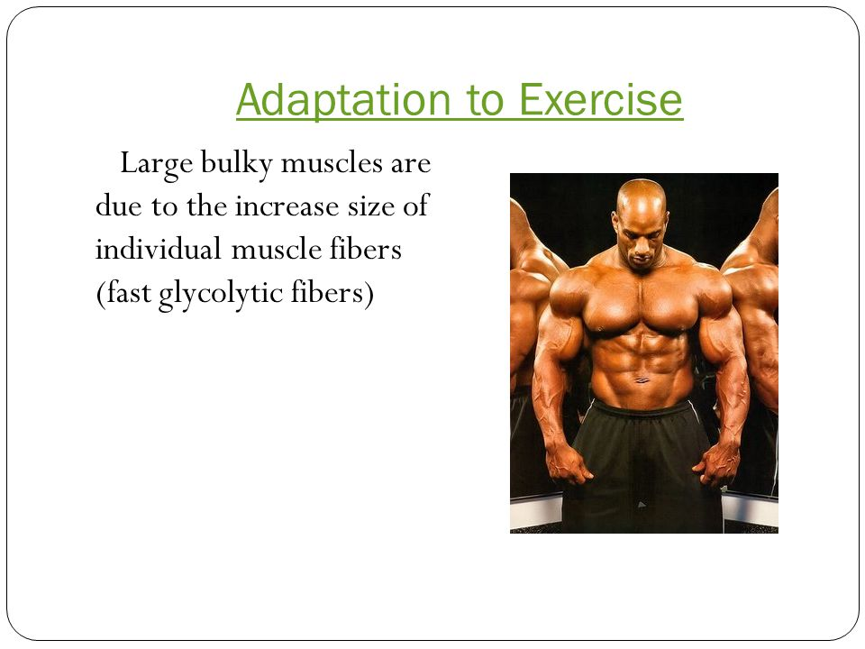 Large bulky muscles are due to the increase size of individual muscle fibers (fast glycolytic fibers)