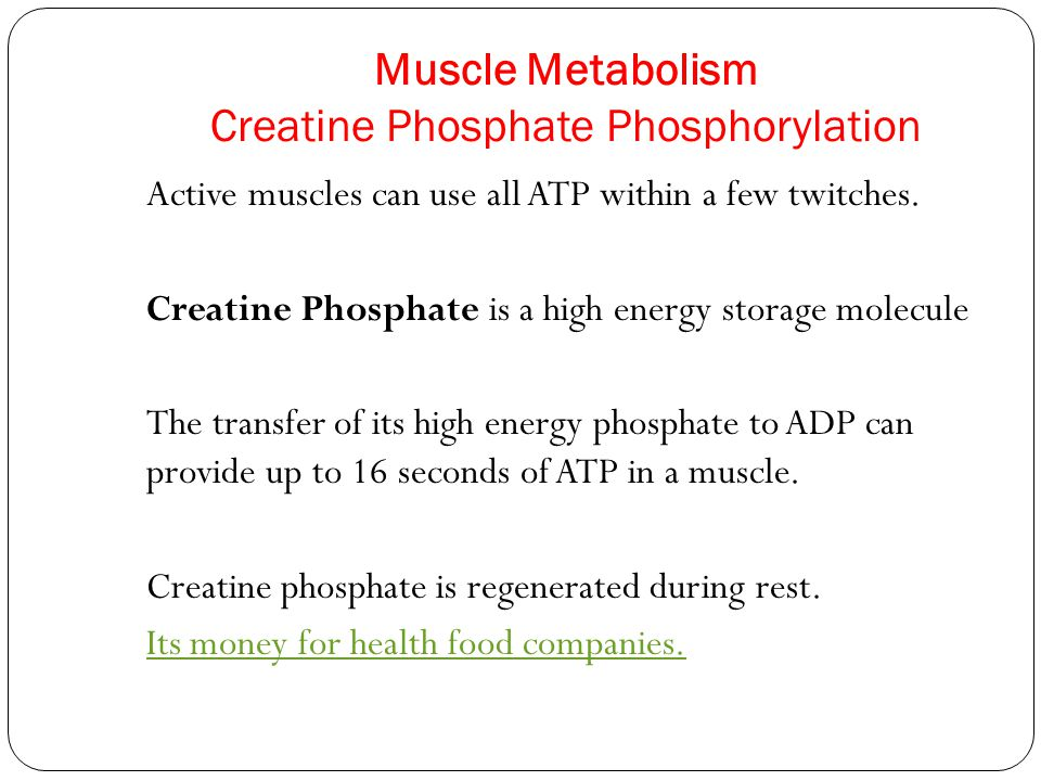 Muscle Metabolism Creatine Phosphate Phosphorylation Active muscles can use all ATP within a few twitches. Creatine Phosphate is a high energy storage