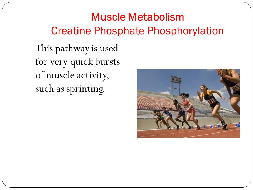 Muscle Metabolism Creatine Phosphate Phosphorylation This pathway is used for very quick bursts of muscle activity, such as sprinting.