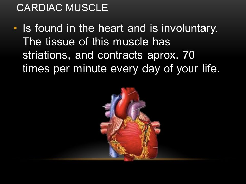 It has a tissue no striated involuntary muscle and is found in many of your internal organs.