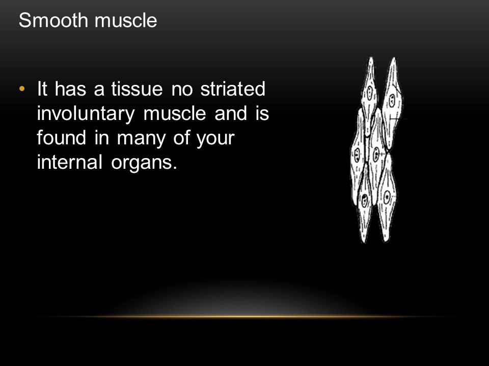 LEVERS The muscular system and the skeletal system work together as a machine.