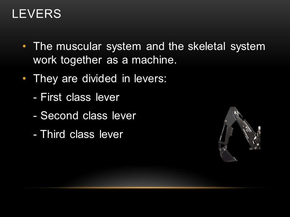 LEVERS First class lever: the fulcrum lies between the effort and the load Second class lever: the load lies between the fulcrum and effort force Third class lever: the effort force is between the fulcrum and load