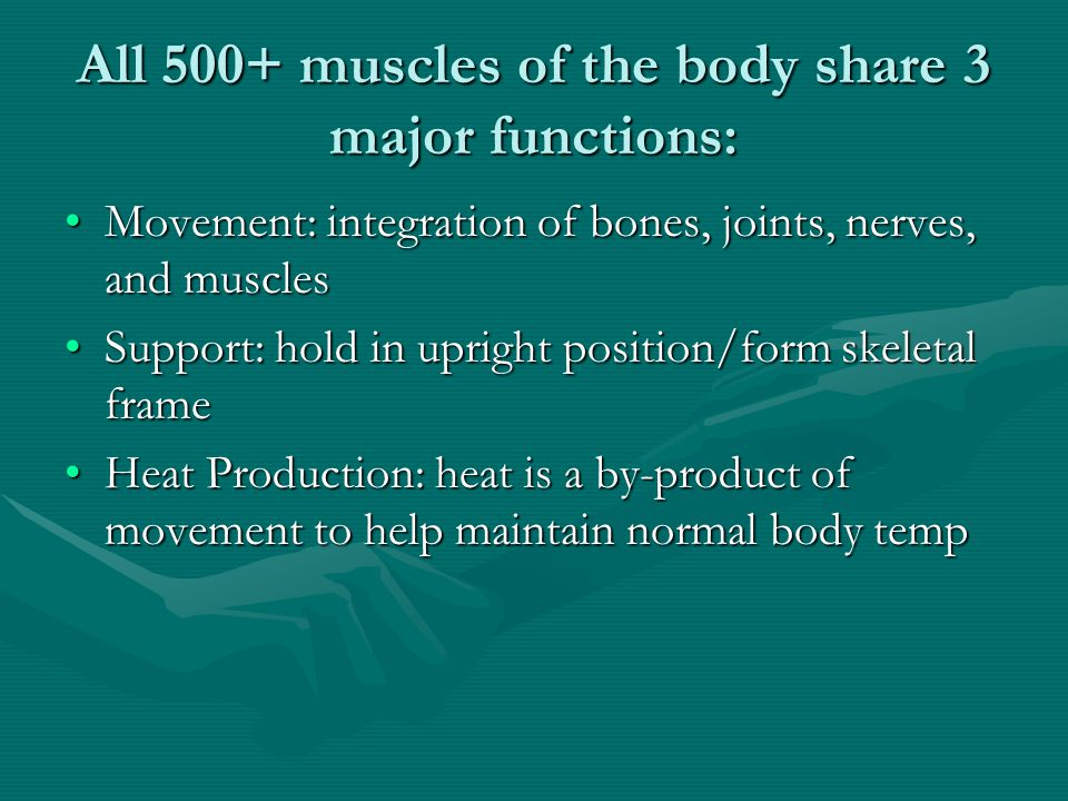 All 500+ muscles of the body share 3 major functions: Movement: integration of bones, joints, nerves, and musclesMovement: integration of bones, joints, nerves, and muscles Support: hold in upright position/form skeletal frameSupport: hold in upright position/form skeletal frame Heat Production: heat is a by-product of movement to help maintain normal body tempHeat Production: heat is a by-product of movement to help maintain normal body temp