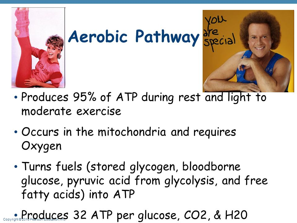 Copyright © 2010 Pearson Education, Inc. Aerobic Pathway Produces 95% of ATP during rest and light to moderate exercise Occurs in the mitochondria and