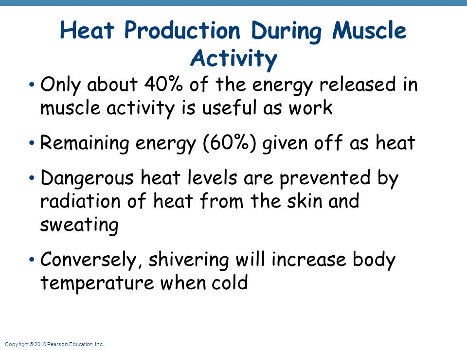 Copyright © 2010 Pearson Education, Inc. Heat Production During Muscle Activity Only about 40% of the energy released in muscle activity is useful as