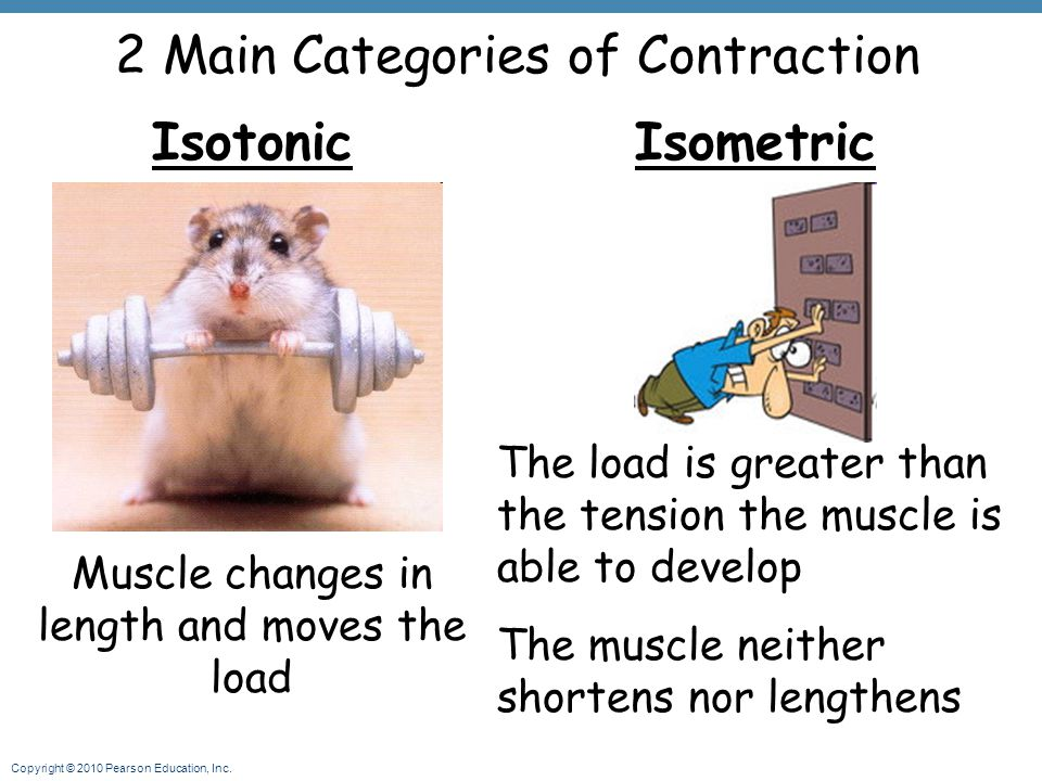 Copyright © 2010 Pearson Education, Inc. 2 Main Categories of Contraction Isotonic Muscle changes in length and moves the load Isometric The load is g