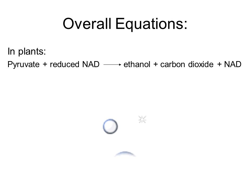 Overall Equations: In plants: Pyruvate + reduced NAD ethanol + carbon dioxide + NAD