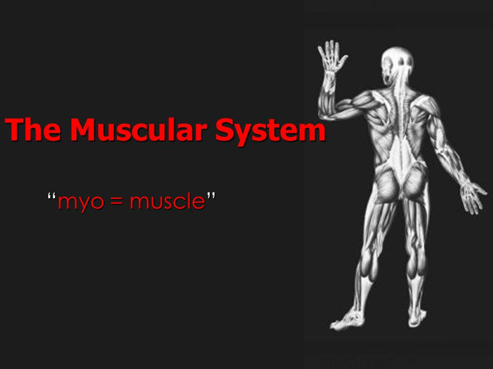 """""""myo = muscle"""" The Muscular System"""