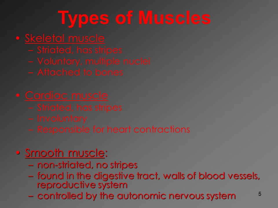 5 Skeletal muscle – –Striated, has stripes – –Voluntary, multiple nuclei – –Attached to bones Cardiac muscle – –Striated, has stripes – –Involuntary –