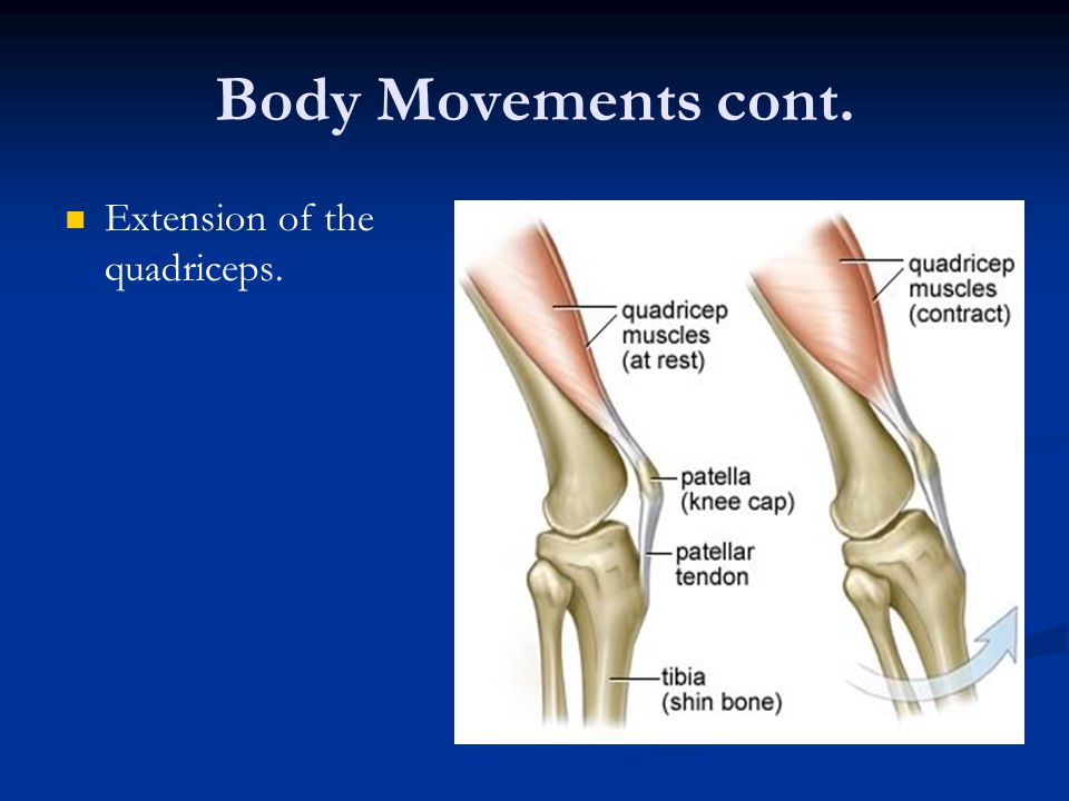Body Movements cont. Extension of the quadriceps.
