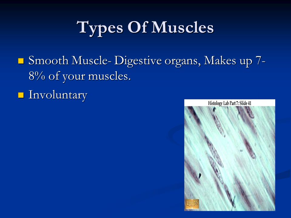 Types Of Muscles Smooth Muscle- Digestive organs, Makes up 7- 8% of your muscles.