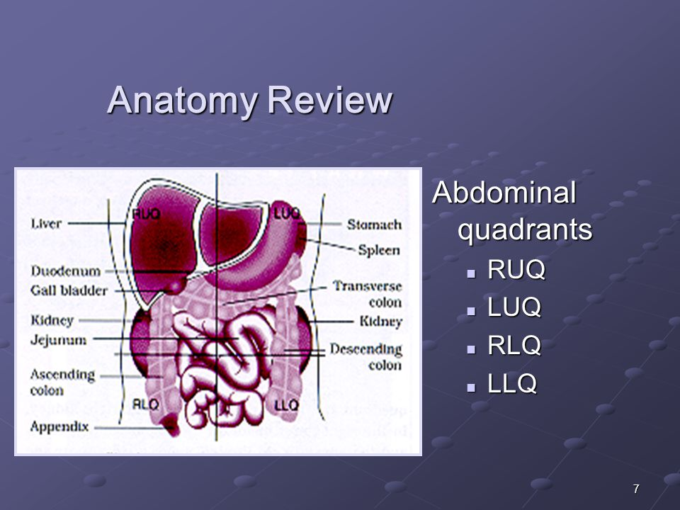 7 Anatomy Review Abdominal quadrants RUQ LUQ RLQ LLQ
