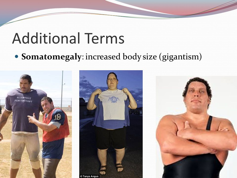 Additional Terms Somatomegaly: increased body size (gigantism)