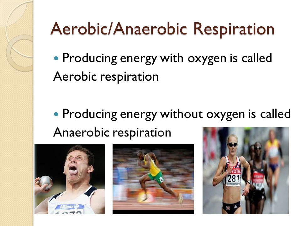 Aerobic/Anaerobic Respiration Producing energy with oxygen is called Aerobic respiration Producing energy without oxygen is called Anaerobic respiration
