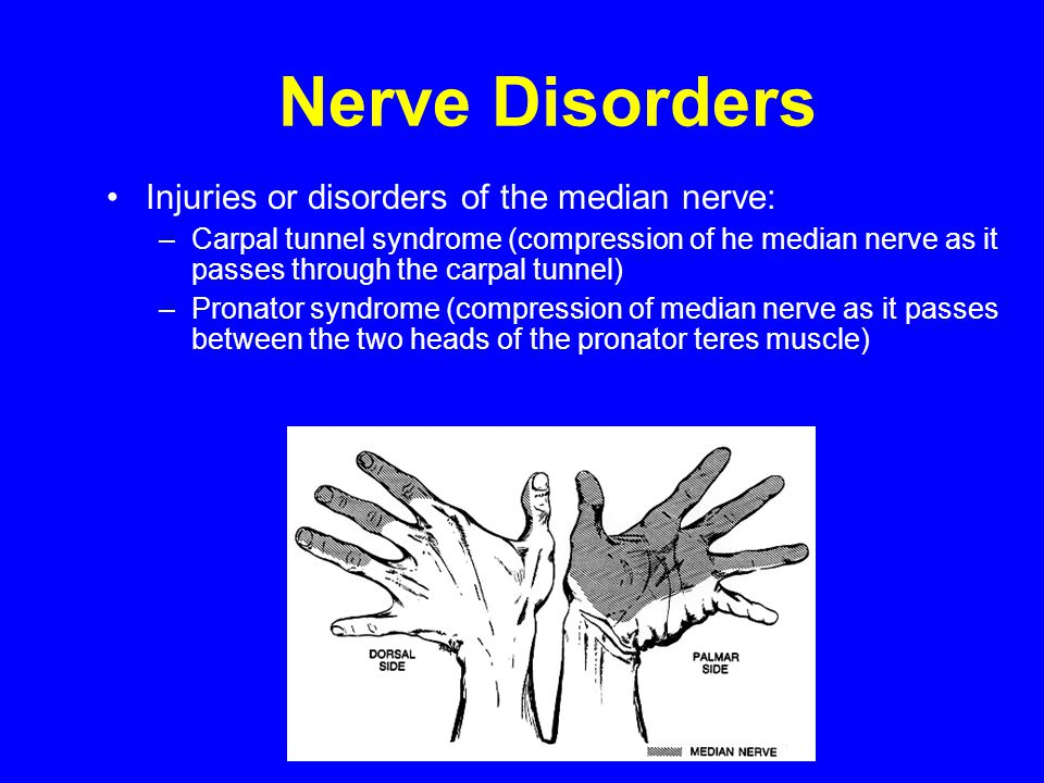 Nerve Disorders Injuries or disorders of the median nerve: –Carpal tunnel syndrome (compression of he median nerve as it passes through the carpal tun