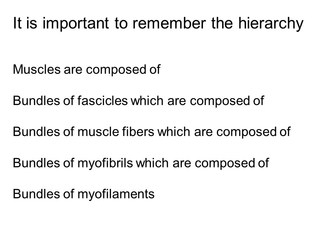 It is important to remember the hierarchy Muscles are composed of Bundles of fascicles which are composed of Bundles of muscle fibers which are compos